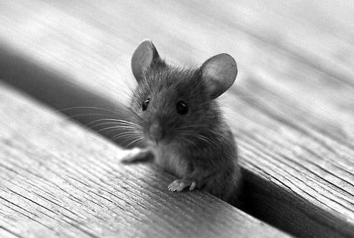 Day 34 – The lonely mouse